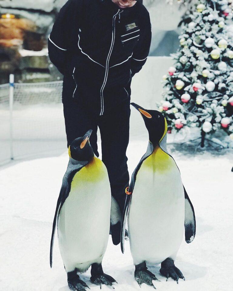 Пингвины в Дубае Ski Dubai